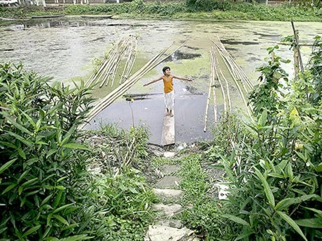 Majuli is home to a diverse mix of people, including the native Assamese population and several ethnic tribes.