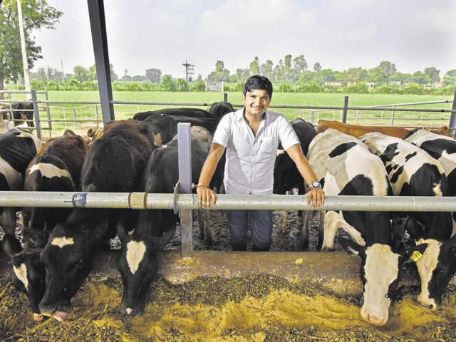 Deepak, who runs a dairy farm in Haryana's Sonepat with his partners — Pankaj Navani and Sukhinder — says they started with 50 heifers instead of milk cows so that they could understand the animals' growth.(Raj K Raj/HT Photo)