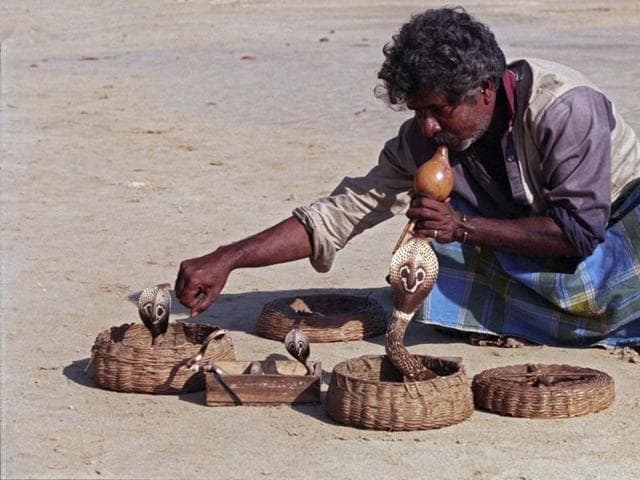 Around 75,000 snake charmers in Bengal can hope of a secure livelihood with assured regular income as the Mamata Banerjee government is all set to follow the Chinese model in setting up snake-breeding farms.