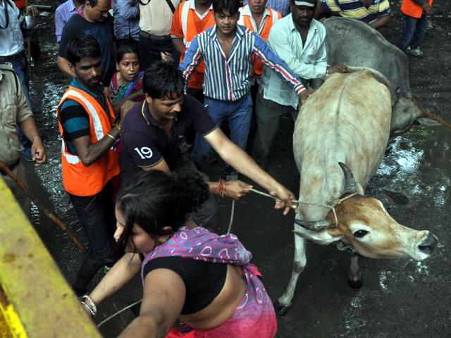 The Chhindwara police have set up a fodder bank to prevent cows rescued from cattle smugglers from starving to death.