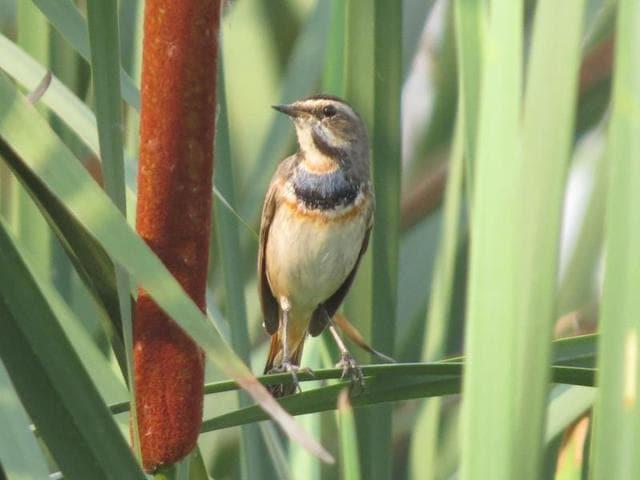 Okhla Sanctuary,Migratory Birds,Places to go in Delhi