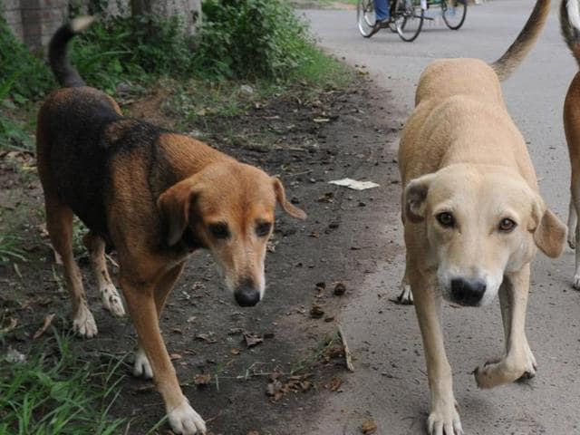 SC said compassion should be shown to stray dogs but they should not be allowed to become a menace to the society.