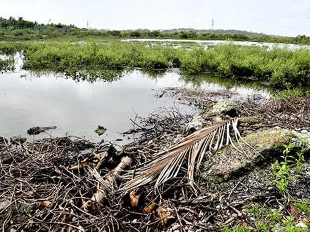 Encroachments on the southern end of the beach have led to the destruction of over 500 to 600 mangrove trees.