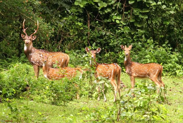 Covering approximately 200 hectares, Ballavpur Wildlife Sanctuary is located in the outskirts of Bolpur town.