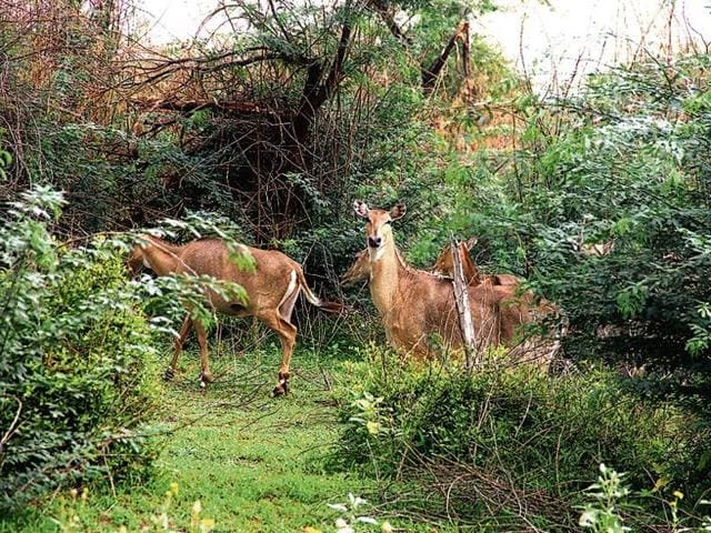 The animals were spotted by forest department officials  who had gone to the Aravallis to dig water pits.