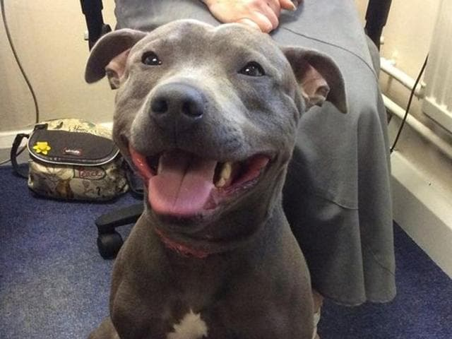 Diesel had been missing for 8 months when he was found at the Manchester airport in UK.