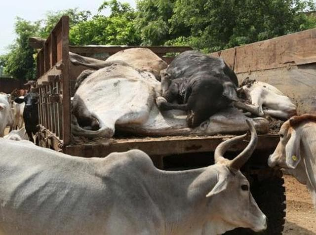 Six people, reportedly from an upper caste, assaulted a family, including a pregnant women, for refusing to dispose of cow carcasses.