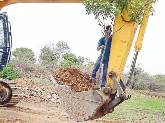 Trees being shifted from the path of the Mega Highway road construction project in Hindauti region of Bundi district.
