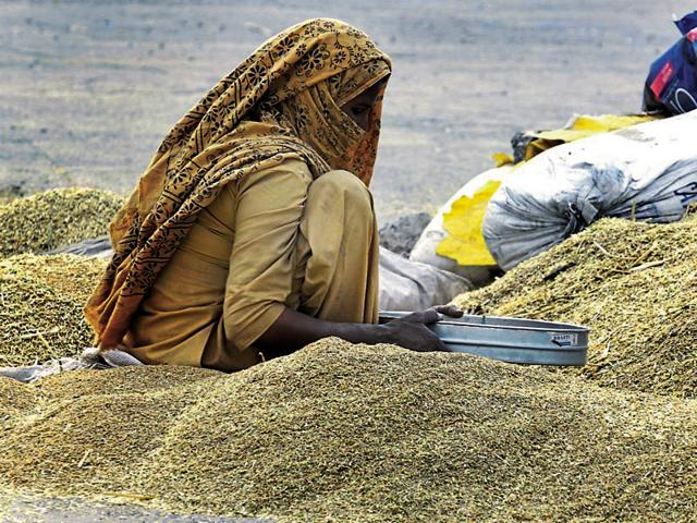A worker sifting grain at the Gill Road Grain Market in Ludhiana on Monday. Chandigarh meteorological department has predicted a rainy Tuesday.