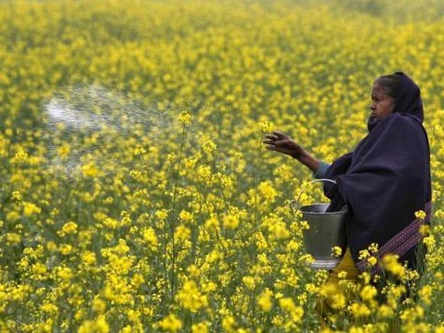 Right-wing outfits got a taste of their own medicine, thanks to the bitter battle over genetically-modified (GM) mustard.