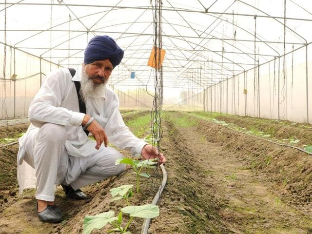 marginal farmers,diversification,Jinder Singh