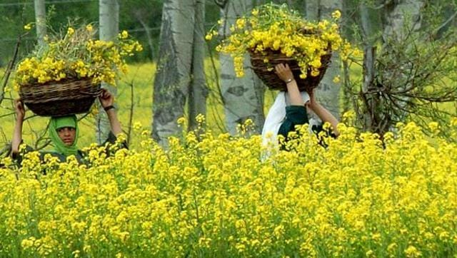 GM mustard is a publicly-funded project developed by scientists of Delhi University.