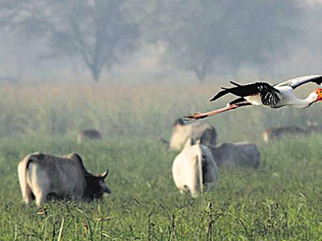 Sultanpur,ecology,animals