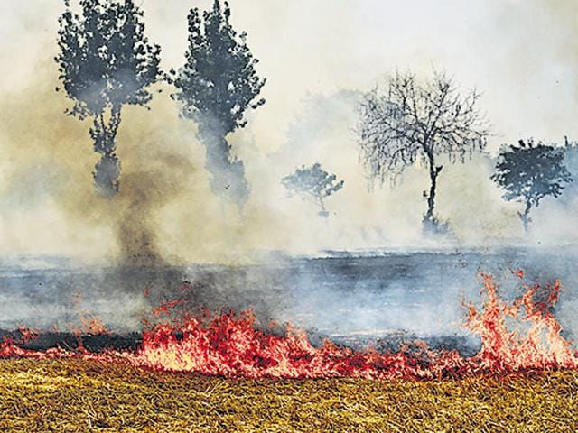 Indiscriminate burning of crop stubble in neighbouring states adds to the air pollution in Delhi.(Gurpreet Singh /HT File)