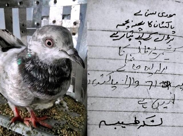 pigeon,Pathankot,surgical strike