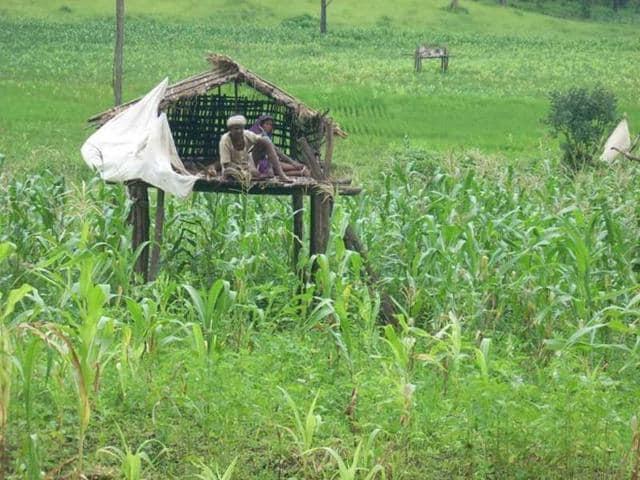 Pilibhit farmer