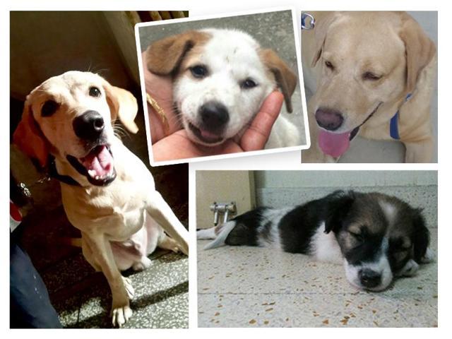 Pet,Adopt,Adoption