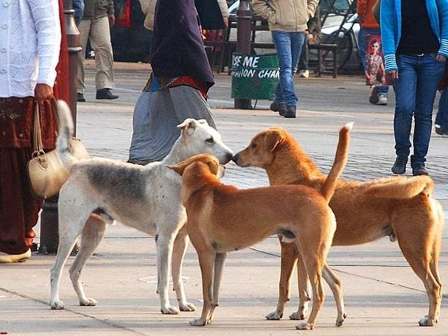 Subsidy offer' for guns to tackle Kerala's stray dog menace