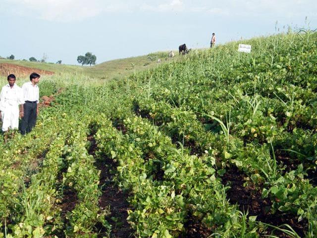 Indore,soybean crop,monsoon rains