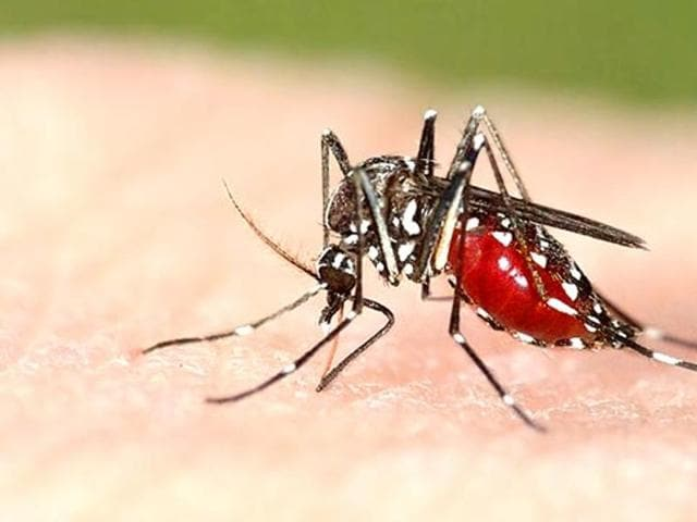 National football player Gaurav Kundu, who stays at Awadhpuri, tested positive for dengue on Wednesday.
