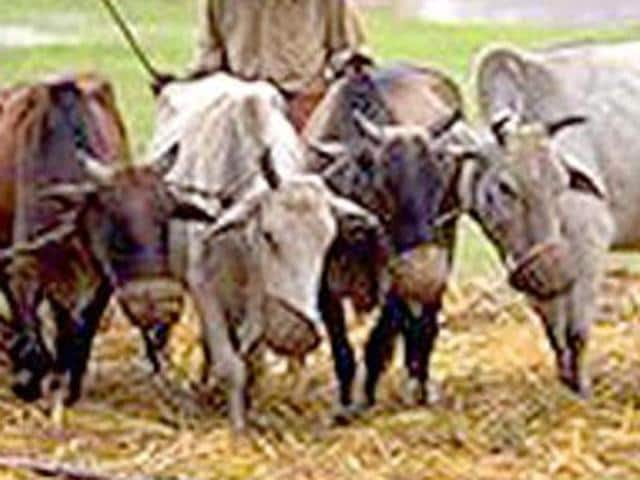 Three men belonging to Muslim community went on trial in Myanmar for illegally importing 92 cows in the country.