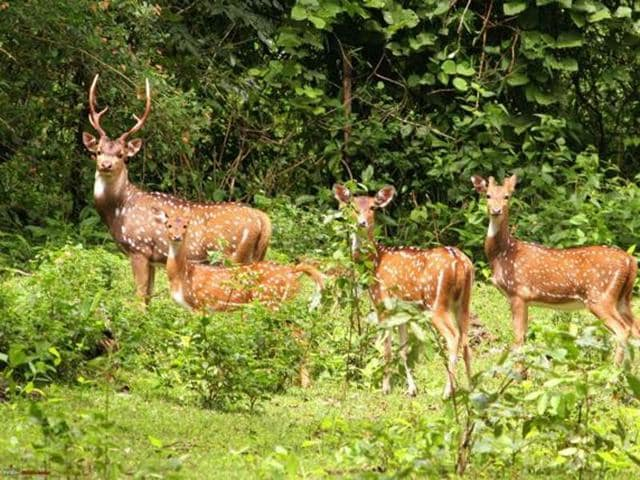 The ministry, however, believes the new fund will give incentive to wildlife conservation by forest departments which face a fund crunch, along with speeding up project approval rates.(Special arrangement)