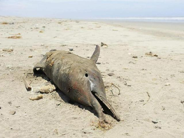 Bengal moves closer to setting up India's second dolphin ...