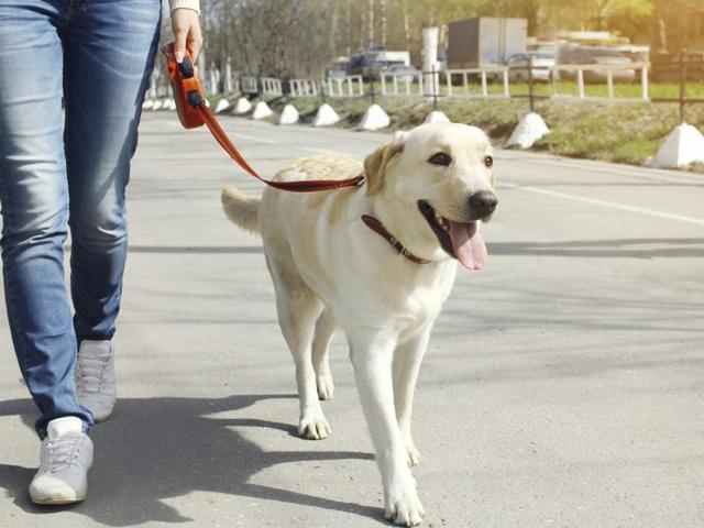 Best friend forever: Here's why walking your dog ensures you stay fit