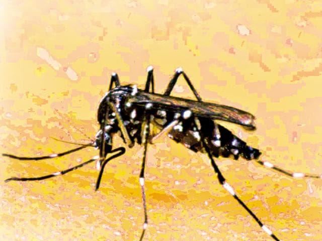 Chikungunya,Mumbai,BMC