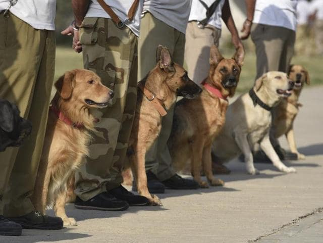 A CISF team trains the dogs at Shastri Park in New Delhi.