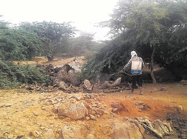 Residents said the carcasses are being dumped in a four to five km radius of the Sikanderpur Ghosi area.