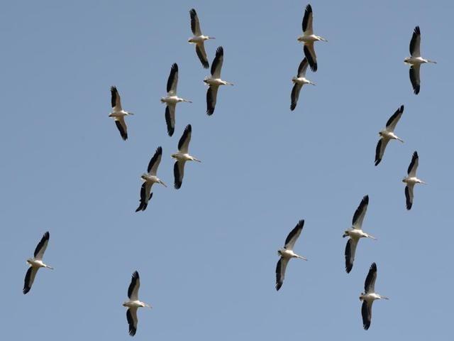 Bird flu in Delhi