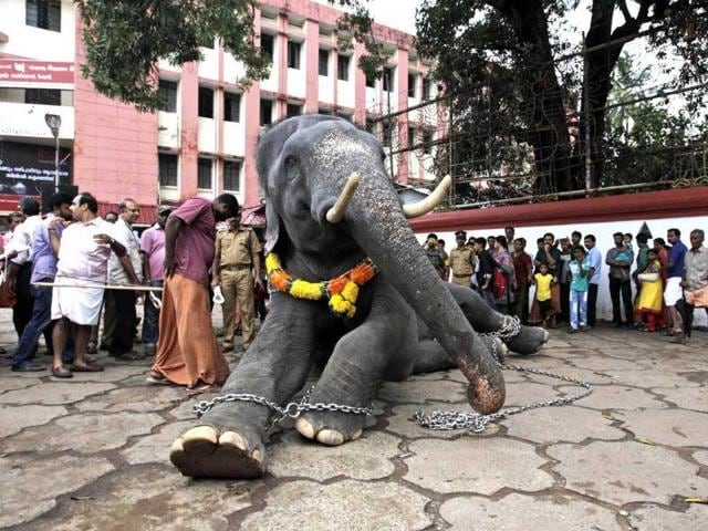 Elephants,Prevention of Cruelty to Animals,Law