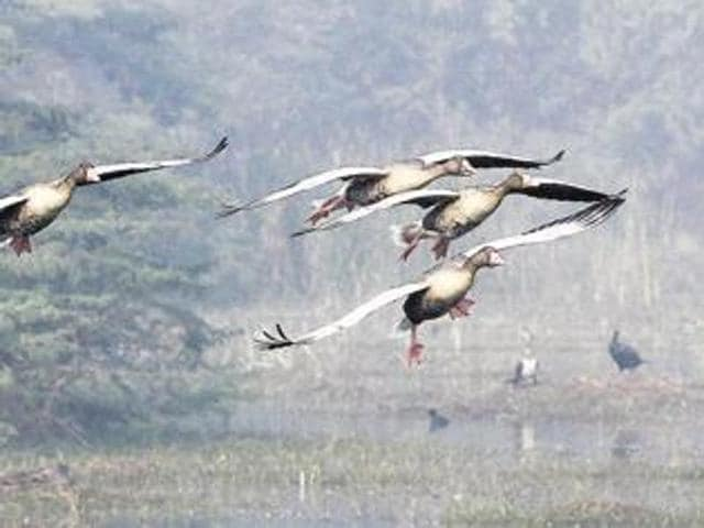 The National Zoological Park in Delhi has been closed temporarily because of bird deaths while others, including Gurgaon's Sultanpur park are on alert for bird flu.