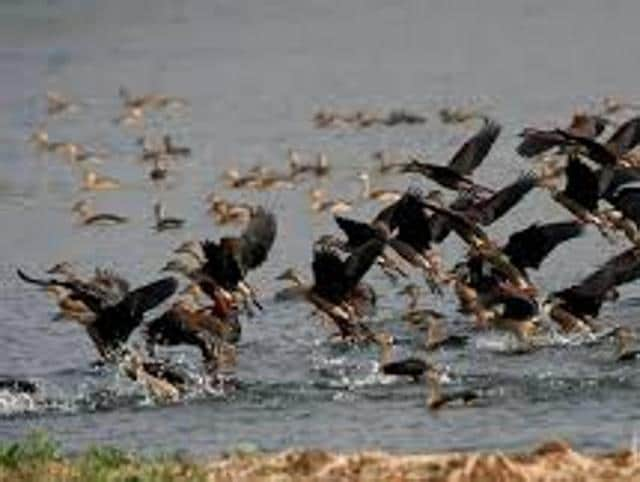 The Central Zoo Authority of India (CZAI) has put zoos in Alipore, Kolkata, and Darjeeling on avian flu alert after the death of some migratory birds in Delhi.