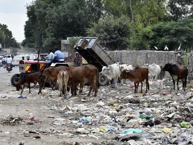 Bird flu,Avian flu,Delhi zoo