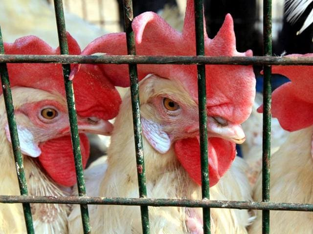 The Delhi government on Wednesday put poultry farms, wholesale markets and avian hot spots under watch after the death of 10 migratory birds at the capital's zoo sparked fears of what could be the first bird flu outbreak in Delhi this season.