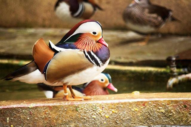 The samples would be tested in a government laboratory to check if the birds have been infected by Avian Flu (H5N1) virus that has already struck Delhi and Gwalior zoos.