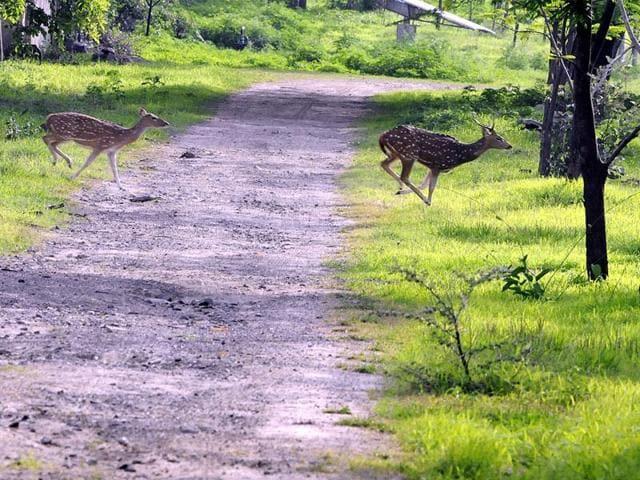 Devguradia hill,MP forest department,ecotourism