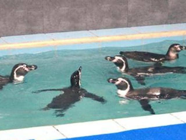 BMC,Penguins,Byculla Zoo