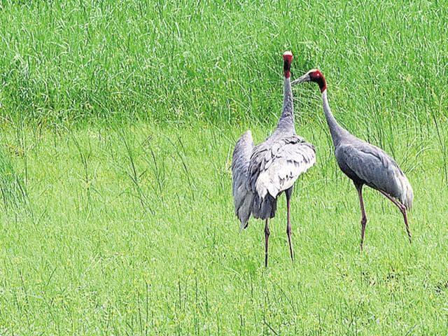 Bhopal,Avian flu,Gwalior zoo