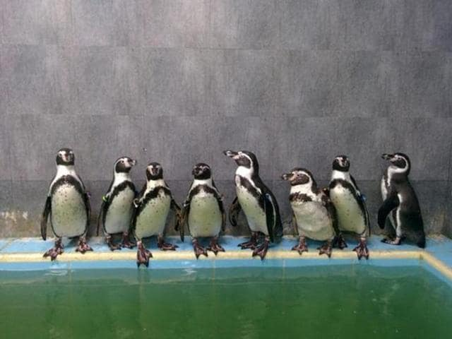 The present contractor will only build the penguin enclosure, which constitutes 15-20% of the revamp plan.