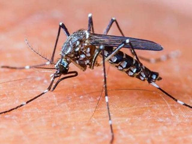 Dengue,Chikungunya,88 cases