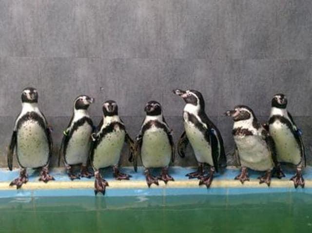 Byculla zoo,Salman Khan,suresh prabhu