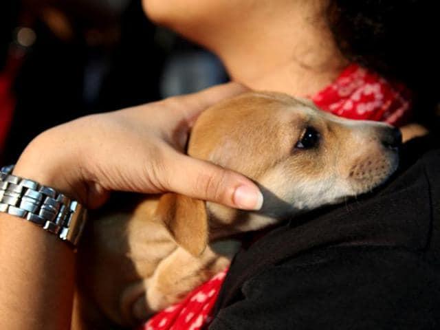 Gift your pet a noiseless Diwali.(Vidya Subramanian /HT Photo)