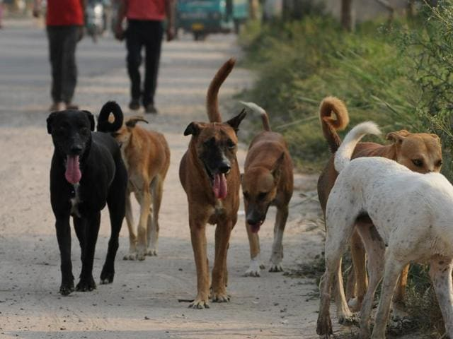 Kerala,Stray dogs,Dogs' culling