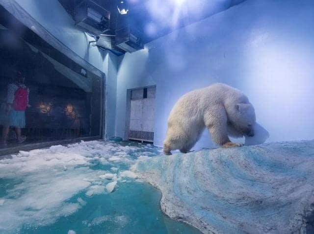 A polar bear is seen at an aquarium in Guangzhou, Guangdong province, China.