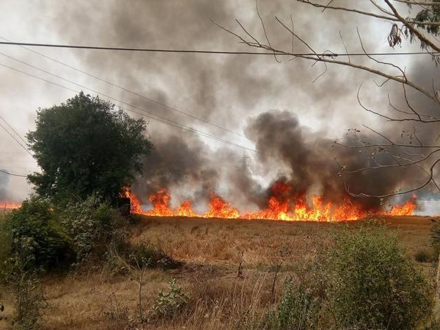 A study by IIT Kanpur listed stubble burning as the third highest contributor to Delhi's winter air-pollution, after construction dust and vehicular fumes.