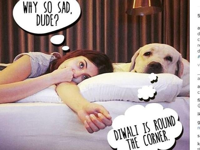 While Diwali is fun for hoomans, it's not as much fun for pets.