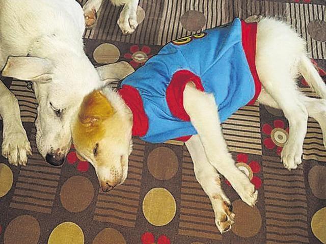 Hatchi,Sudha Candran,Diwali